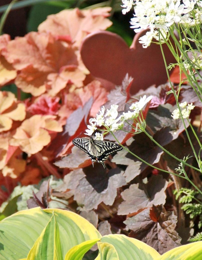 ◆庭が賑やかに・・・_e0154682_18150167.jpg