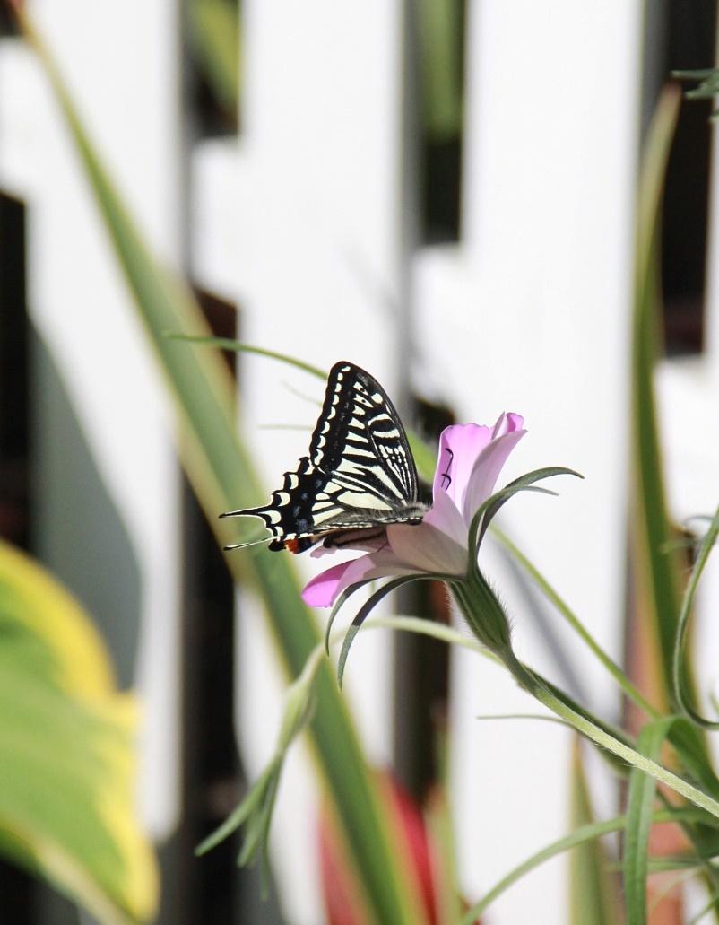 ◆庭が賑やかに・・・_e0154682_18151793.jpg