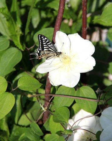 ◆庭が賑やかに・・・_e0154682_18162406.jpg