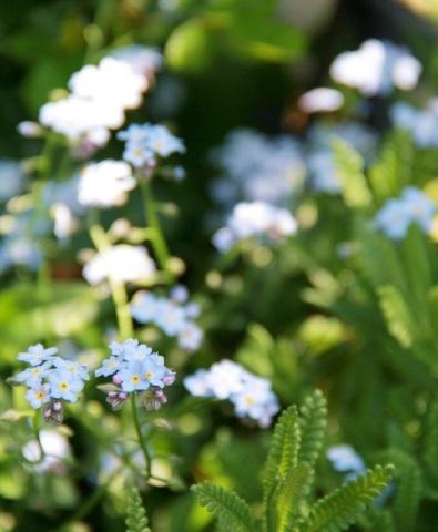 ◆庭が賑やかに・・・_e0154682_18164544.jpg