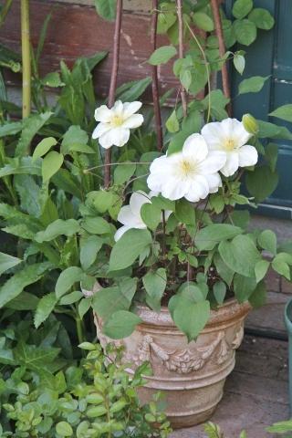 ◆庭が賑やかに・・・_e0154682_18175698.jpg