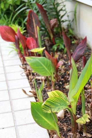 ◆庭が賑やかに・・・_e0154682_18452639.jpg
