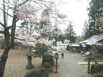 こんな桜もあるんです_a0096989_1074941.jpg