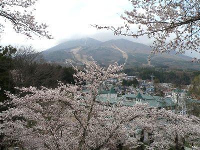 こんな桜もあるんです_a0096989_1094671.jpg
