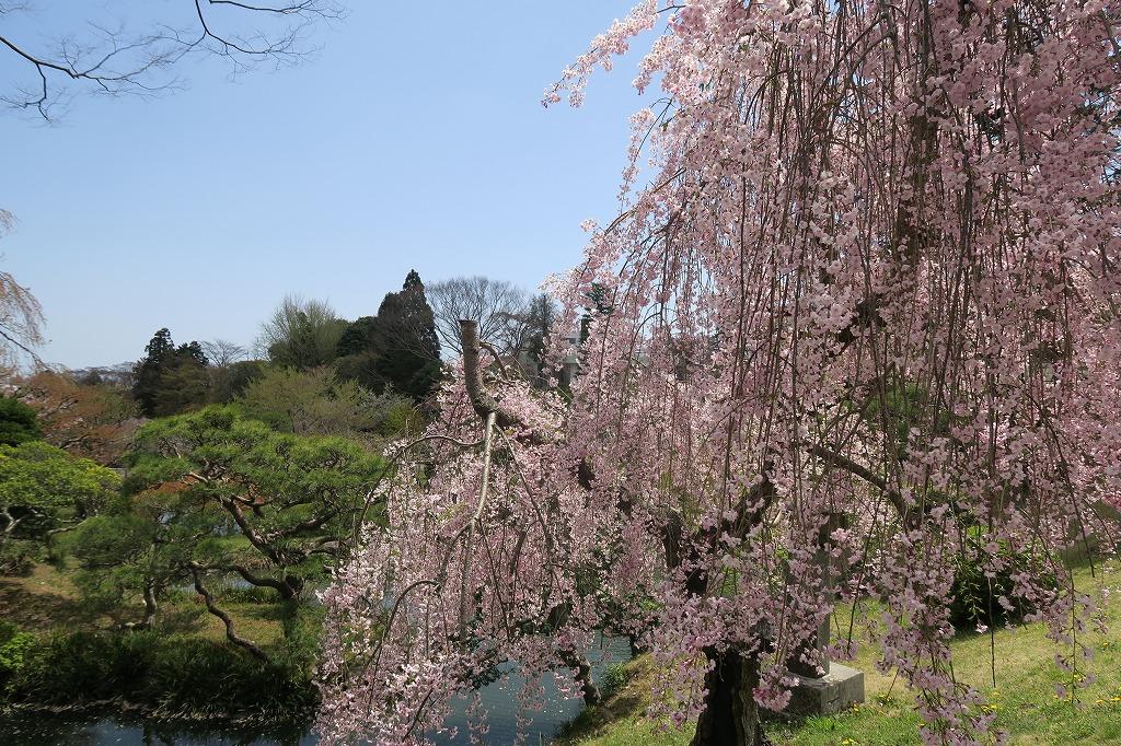 桜三昧Ⅱ_f0138096_22414149.jpg