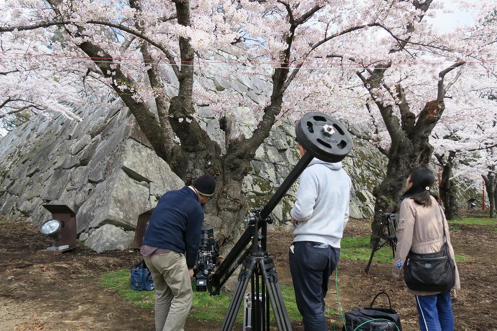 桜三昧Ⅱ_f0138096_22421270.jpg