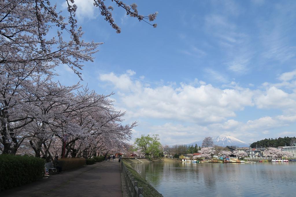 桜三昧Ⅱ_f0138096_22425591.jpg