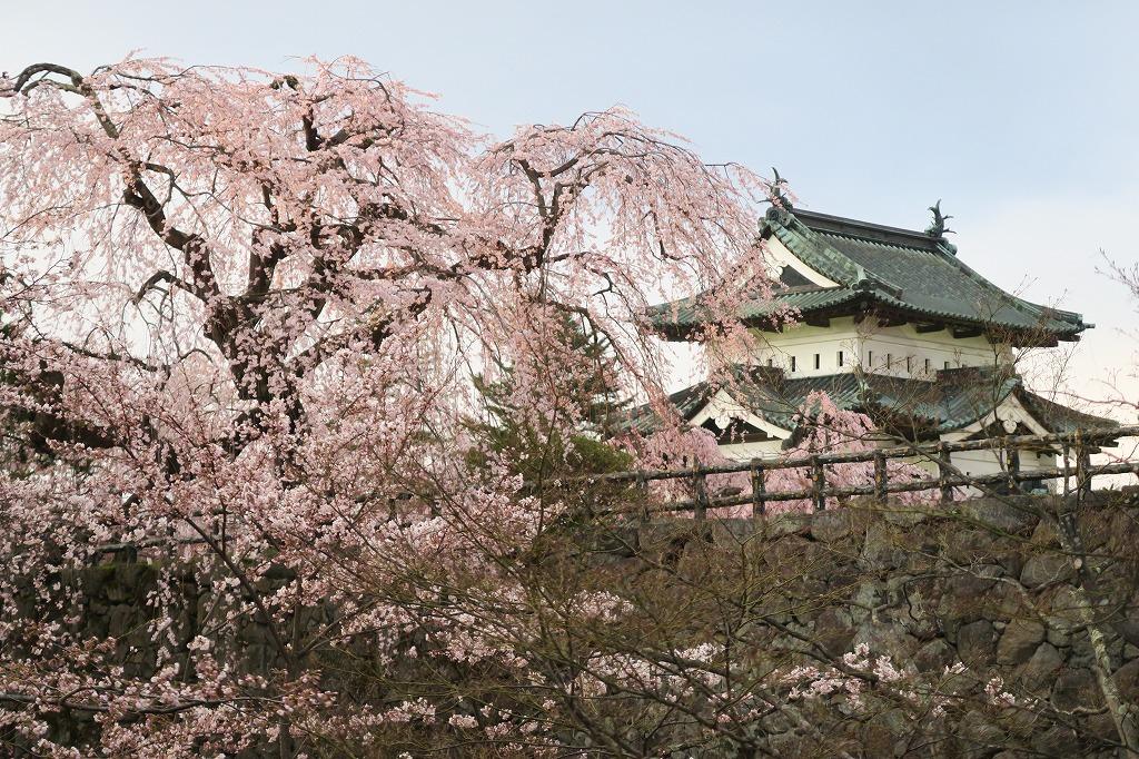 桜三昧Ⅱ_f0138096_2243578.jpg