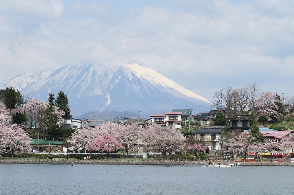 桜三昧Ⅱ_f0138096_2243895.jpg