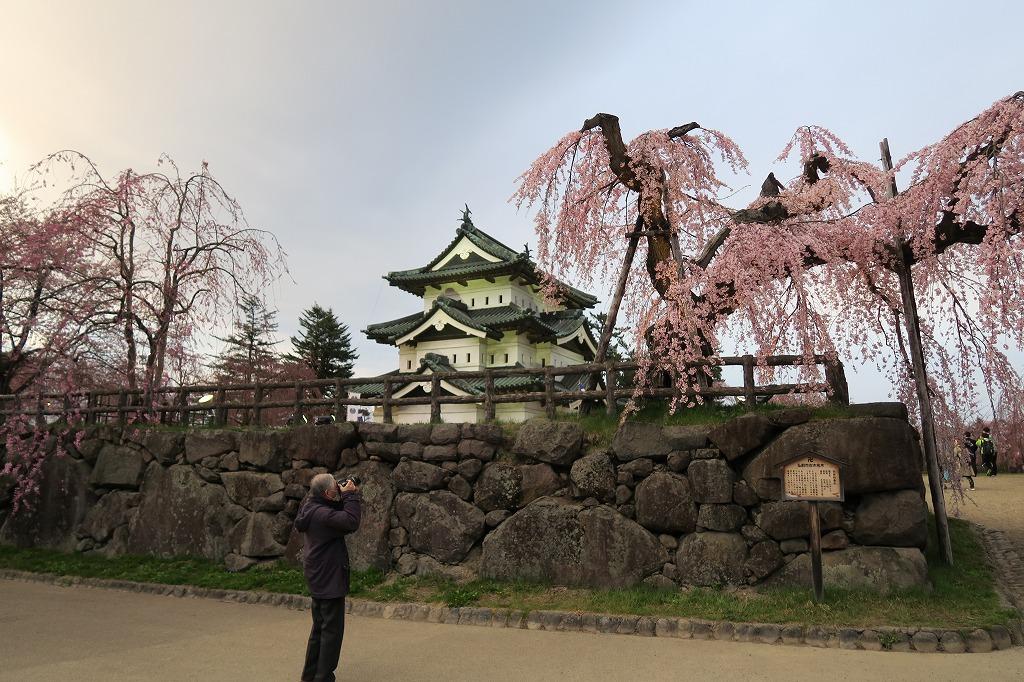 桜三昧Ⅱ_f0138096_22443560.jpg