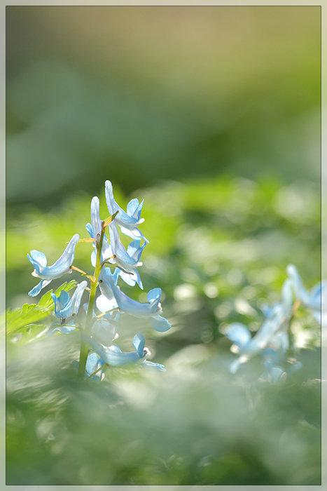 春が咲く。_e0235910_10534647.jpg