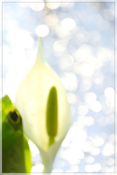 春が咲く。_e0235910_10540701.jpg