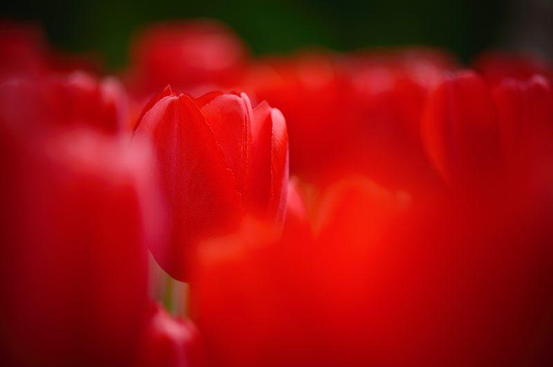 咲いた~♪咲いた♪チューリップの花が@府立植物園_f0032011_1910382.jpg