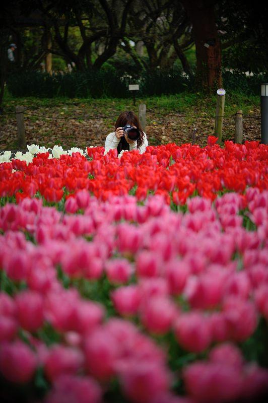 咲いた~♪咲いた♪チューリップの花が@府立植物園_f0032011_19105734.jpg