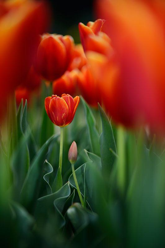 咲いた~♪咲いた♪チューリップの花が@府立植物園_f0032011_19125926.jpg