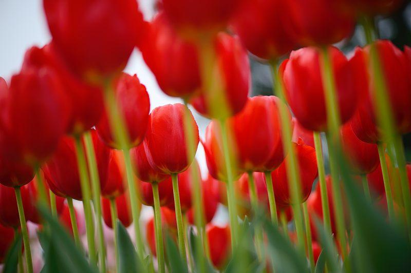 咲いた~♪咲いた♪チューリップの花が@府立植物園_f0032011_19145177.jpg