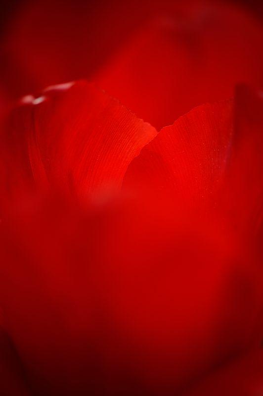 咲いた~♪咲いた♪チューリップの花が@府立植物園_f0032011_19181948.jpg