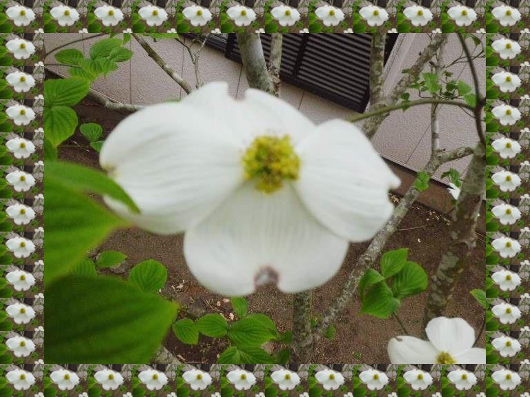 b0352112_200788.jpg