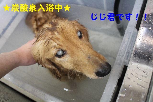 b0130018_83332.jpg