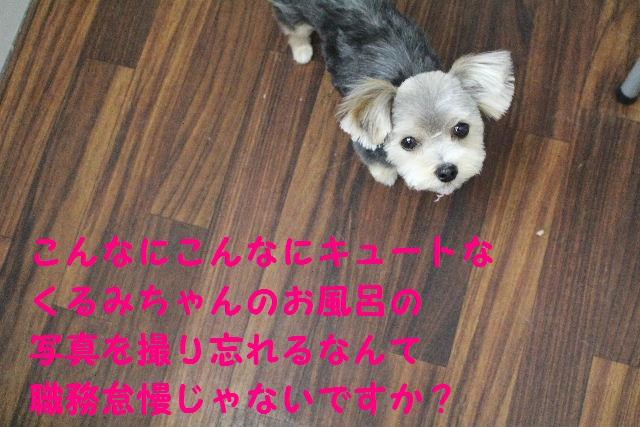 b0130018_855524.jpg