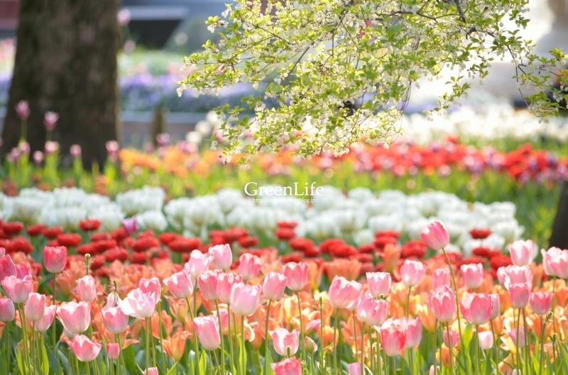 colorful_f0321522_09032469.jpg