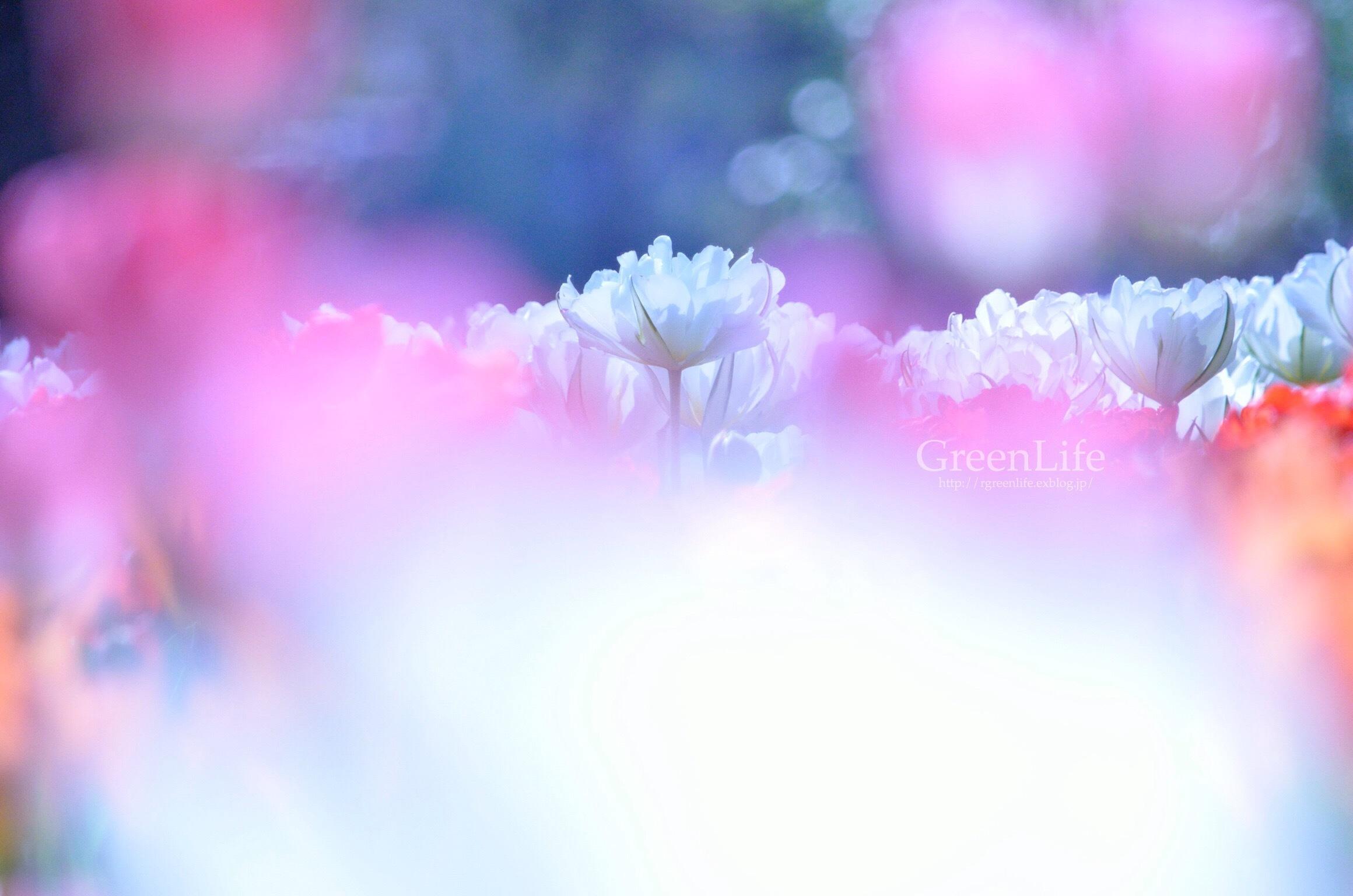 colorful_f0321522_09092775.jpg