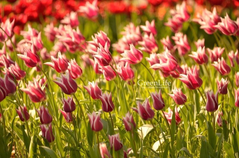 colorful_f0321522_09144524.jpg