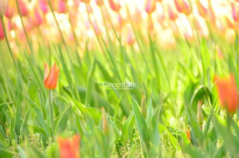 colorful_f0321522_09412273.jpg