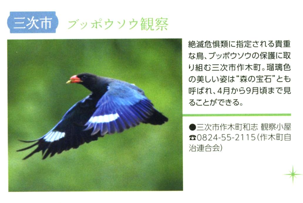 山と守り人と瑠璃色の鳥。_e0295926_1803175.jpg