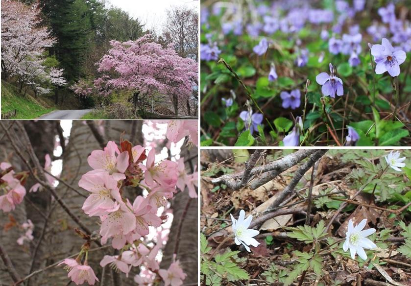 春のいろ_a0212730_1643297.jpg