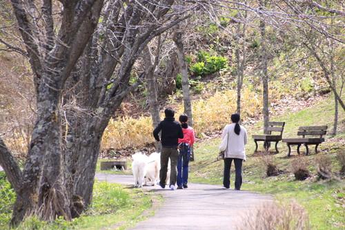 春採公園シマエナガの家つくり 4月21日_f0113639_15592189.jpg