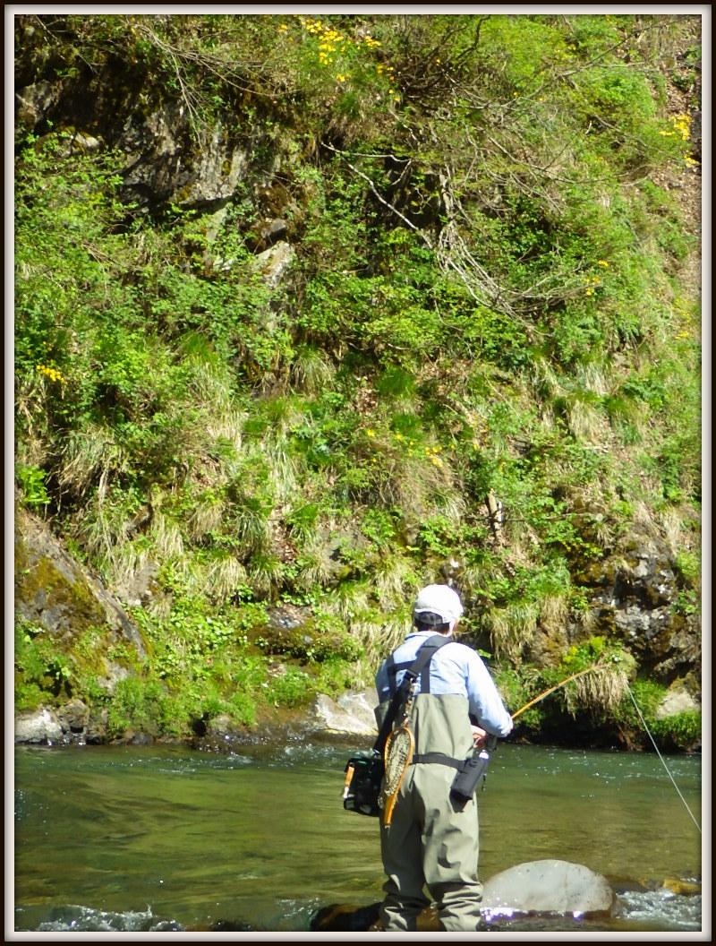 新緑の渓でアマゴ釣り_f0053342_11283795.jpg