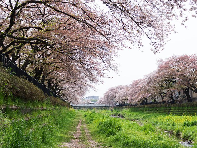 Hello from Tokyo 45 調布野川遊歩道_a0003650_1629263.jpg