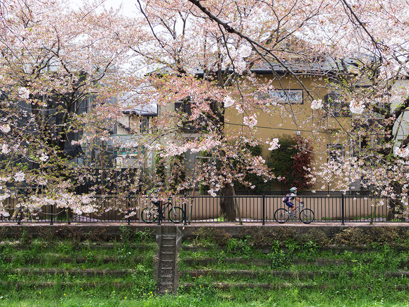 Hello from Tokyo 45 調布野川遊歩道_a0003650_1637424.jpg