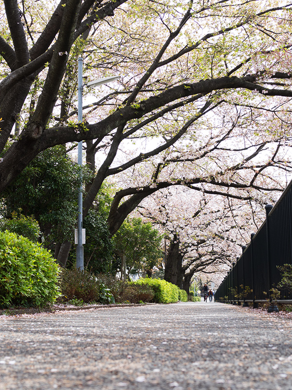 Hello from Tokyo 45 調布野川遊歩道_a0003650_16374816.jpg