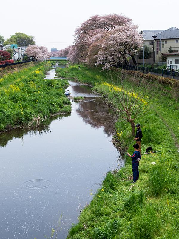 Hello from Tokyo 45 調布野川遊歩道_a0003650_16392582.jpg
