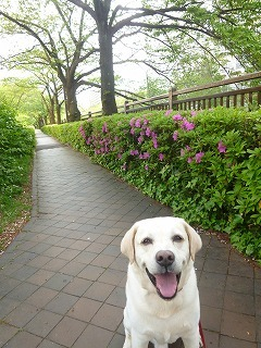 with dog  新緑と花と笑顔に癒されて_a0165160_15144162.jpg