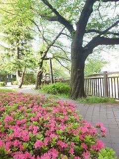 with dog  新緑と花と笑顔に癒されて_a0165160_15225430.jpg
