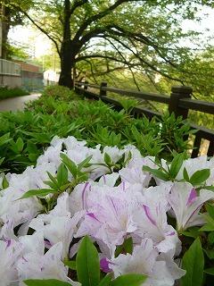 with dog  新緑と花と笑顔に癒されて_a0165160_15244233.jpg