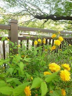 with dog  新緑と花と笑顔に癒されて_a0165160_15251578.jpg