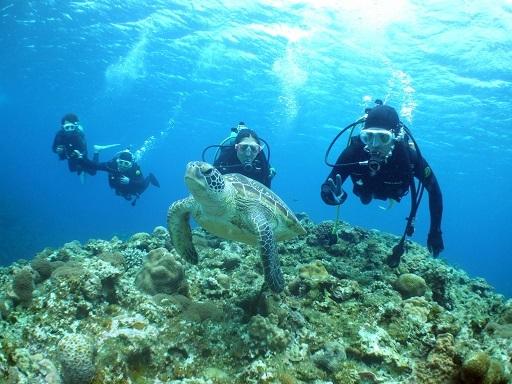ケラマでウミガメと泳いできました!!_a0156273_17453512.jpg