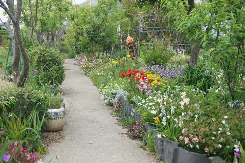 今日の庭_e0181373_21401072.jpg