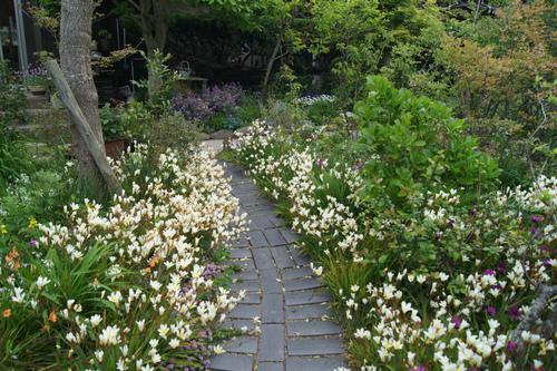 今日の庭_e0181373_21414790.jpg