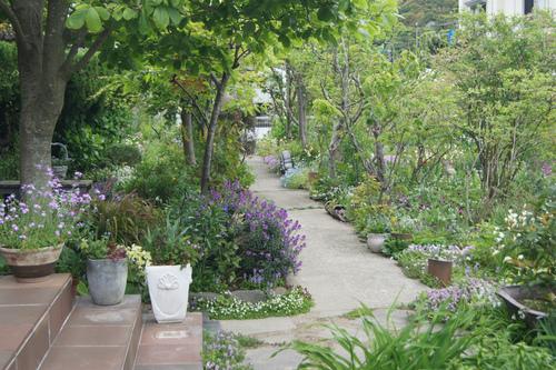 今日の庭_e0181373_21421690.jpg