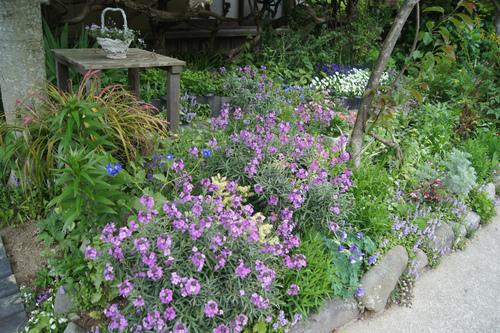 今日の庭_e0181373_2142351.jpg