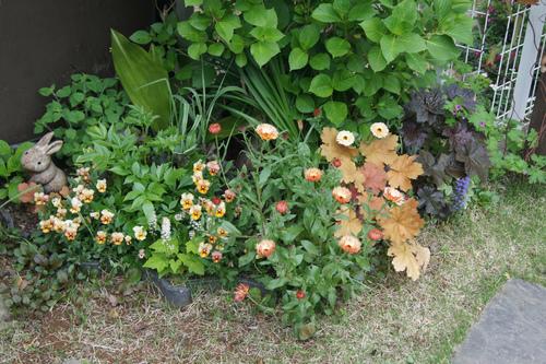 今日の庭_e0181373_21504241.jpg