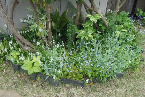 今日の庭_e0181373_21505088.jpg