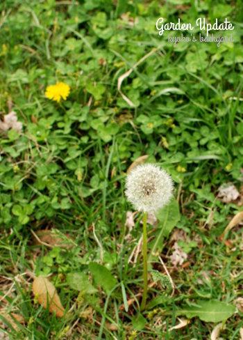 花壇の様子と野菜の苗たち(4月中旬)_b0253205_02532364.jpg