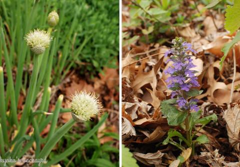 花壇の様子と野菜の苗たち(4月中旬)_b0253205_02550452.jpg