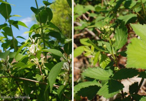 花壇の様子と野菜の苗たち(4月中旬)_b0253205_02553117.jpg